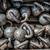 many kettlebells weights background at fitness gym stock photo © maridav