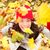 Autumn woman happy with colorful fall leaves stock photo © Maridav