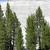 ヨセミテ国立公園 · ドーム · カリフォルニア · 風景 · 風景 - ストックフォト © maridav