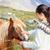 chevaux · paysage · ciel · bleu · printemps · herbe - photo stock © maridav