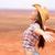nő · mosolyog · boldog · amerikai · préri · visel · cowboykalap - stock fotó © maridav