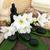 fiore · trattamento · termale · aromaterapia · bagno · accessori · fiori - foto d'archivio © marilyna