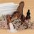 trattamento · termale · mare · corpo · salute · sfondo · frame - foto d'archivio © marilyna