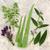 fresh herbs for skin care stock photo © marilyna