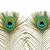 tavuskuşu · tüy · beyaz · doğa · kuş · yeşil - stok fotoğraf © marilyna