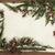 Cedar Cypress and Fir Border stock photo © marilyna