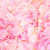 peony petal beauty stock photo © marilyna