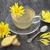 crisântemo · flor · chá · flores · bule - foto stock © marilyna