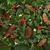 kış · flora · fauna · ökseotu · sarmaşık · yaprak - stok fotoğraf © marilyna