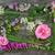 kwiaty · składniki · bambusa - zdjęcia stock © marilyna