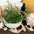 levendula · gyógynövény · virág · levél · aromaterápia · alapvető - stock fotó © marilyna