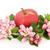 gala · appel · bloem · bloesem · bladeren · geïsoleerd - stockfoto © marilyna