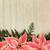 pink poinsettia flower border stock photo © marilyna