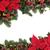 Christmas Floral Border stock photo © marilyna