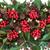 Natale · inverno · flora · ivy · vischio · blu - foto d'archivio © marilyna