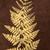 gold fern stock photo © marilyna