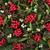 Holly and Mistletoe  stock photo © marilyna
