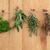 ervas · enforcamento · erva · folha · flor · aço · inoxidável - foto stock © marilyna