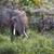 elefante · africano · grande · bancos · río · Botswana - foto stock © mariusz_prusaczyk
