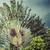 coconut palm in hawaii usa stock photo © mariusz_prusaczyk