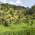 groene · rijst · velden · bali · eiland · voedsel - stockfoto © mariusz_prusaczyk