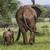 twee · giraffen · lopen · gras · park · Botswana - stockfoto © mariusz_prusaczyk