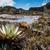 rzadki · roślin · plateau · Wenezuela · charakter · liści - zdjęcia stock © mariusz_prusaczyk