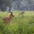 群れ · ボツワナ · サバンナ · 草 · 自然 · 光 - ストックフォト © mariusz_prusaczyk