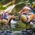 mandarynka · kaczka · kolorowy · wody · zimą - zdjęcia stock © mariusz_prusaczyk