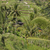 manzara · bali · Endonezya · doğa · alan - stok fotoğraf © mariusz_prusaczyk