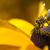 マクロ · 蜂 · 黄色の花 · 黄色 · 桜 · 昆虫 - ストックフォト © mariusz_prusaczyk