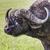 Güney · Afrika · doğa · kafa · hayvan - stok fotoğraf © mariusz_prusaczyk