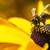 verzamelen · honing · bee · roze · bloem · schoonheid - stockfoto © mariusz_prusaczyk