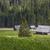 ovejas · escandinavia · valle · hierba · naturaleza - foto stock © mariusz_prusaczyk