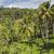 groene · rijst · velden · bali · eiland · Indonesië - stockfoto © Mariusz_Prusaczyk