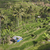 yeşil · pirinç · alanları · bali · ada · Endonezya - stok fotoğraf © mariusz_prusaczyk
