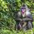 masculino · retrato · babuíno · primaz · chamada · fora - foto stock © mariusz_prusaczyk