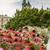 собора · Краков · Польша · зеленый · газона · здании - Сток-фото © mariusz_prusaczyk