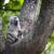 сохранение · Танзания · синий · путешествия · гор - Сток-фото © mariusz_prusaczyk