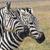 zebra · park · Afrika · Kenya · absztrakt · természet - stock fotó © mariusz_prusaczyk