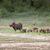 warthogs near a water hole in tarangire national park in tanzani stock photo © mariusz_prusaczyk