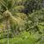 güzel · yeşil · teras · alanları · bali · Endonezya - stok fotoğraf © mariusz_prusaczyk