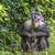 retrato · adulto · naturalismo · habitat · floresta · macaco - foto stock © mariusz_prusaczyk
