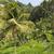 velden · vallei · himalayas · natuur · bergen · architectuur - stockfoto © mariusz_prusaczyk