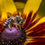 honingbij · nectar · violet · bloem · natuur · oranje - stockfoto © mariusz_prusaczyk