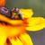 Biene · Gänseblümchen · Blume · Arbeit · Hintergrund - stock foto © mariusz_prusaczyk