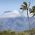 ヤシの木 · 砂浜 · ハワイ · ツリー · 砂の - ストックフォト © mariusz_prusaczyk