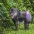 macaco · masculino · retrato · animal · floresta · Camarões - foto stock © mariusz_prusaczyk