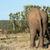 elefánt · áll · bokrok · mező · erdő · természet - stock fotó © markdescande