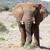 África · sabana · elefantes · puesta · de · sol · árbol · África - foto stock © markdescande